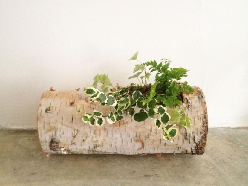 birch log 1