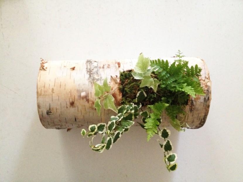 birch log 2