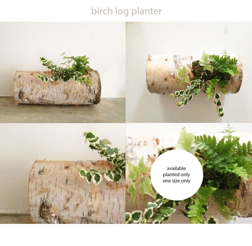 product sheet birch log
