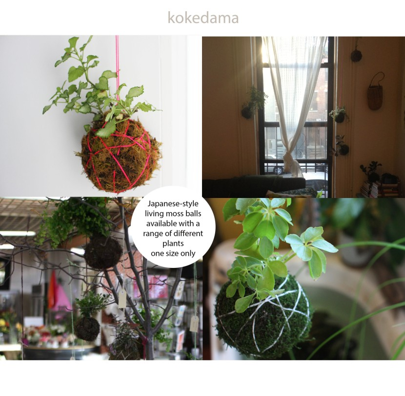 product sheet kokedama